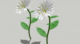 Sketchup Flowers
